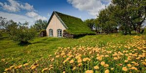 Gereja di Islandia Dibangun Beratap Rumput Alami