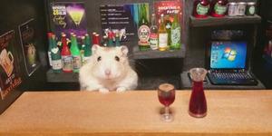 Ginji, Hamster Imut Pelayan Kedai Jepang