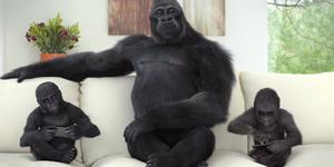 Iklan Layar Gorilla Glass 4 Tampilkan Aksi Gorilla Lucu