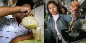 Jus Kodok Jadi Minuman Kesehatan Peru
