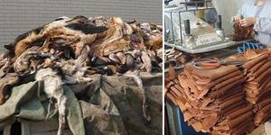 Industri Kerajinan Berbahan Kulit Anjing di Tiongkok Menuai Kecaman