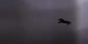 Video Penampakan Kuda Terbang Di Langit Mekkah, Al-Buraq?