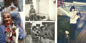 Ann Knowles Memelihara 1.000 Kucing Seumur Hidupnya