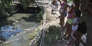 Buaya Kelaparan Penuhi Selokan Warga Brasil