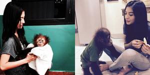 Heboh Foto Raline Shah Selfie Bareng Orangutan