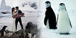 Pernikahan Romantis Presenter Taiwan di Antartika Disaksikan Penguin