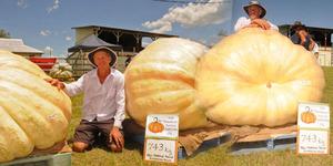 Petani Australia Panen Labu Raksasa Seberat 743 Kg