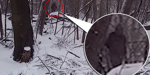 Video Penampakan Bigfoot di Brooklyn