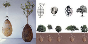 Capsula Mundi, Peti Mati 'Go Green' Ubah Jasad Jadi Pohon