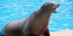 Kisah Remaja Stres Bunuh Diri Diselamatkan Singa Laut