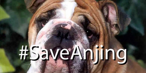 Meme Ahok Dimaki DPRD, #SaveAnjing Sampai #SaveHajiLulung