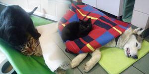 Kucing Hitam Jadi Suster Ikut Rawat Hewan Sakit