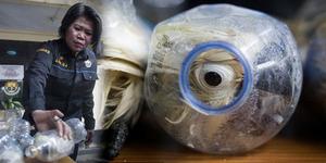 Penyelundup Hewan Langka Simpan Burung Kakatua dalam Botol Bekas