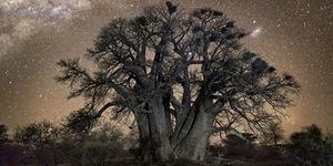 Foto Pohon Tertua di Bumi Dengan Latar Zaman Purba