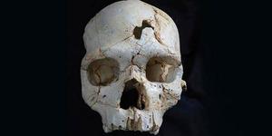 Ilmuwan Temukan Tengkorak Korban Pembunuhan Pertama
