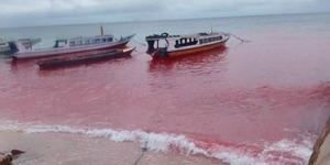 Laut Merah Darah di Maluku Bikin Nelayan Takut
