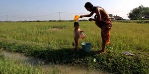 Kemarau di Bengkulu, Warga Minum Air Rawa