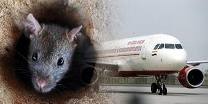 Ada Tikus di Pesawat, Penerbangan Rute India-Italia Batal