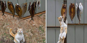 Warga Inggris Laporkan Kucing Garong ke Polisi
