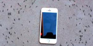 iPhone Kendalikan Kawanan Semut Buat 'Lingkaran Kematian'