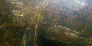 Pesawat Aviastar Ditemukan Hancur, 3 Mayat Hangus Terbakar