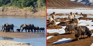 6 Taman Safari Terbaik Di Dunia
