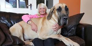 Presley, Anjing Yang Mirip Dengan Scooby Doo