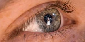 Keren, Peter Adams-Shawn Potret Foto Pernikahan Lewat Cerminan Mata