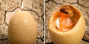 Lilin Telur Unik Isi Bayi Dinosaurus Yang Menggemaskan