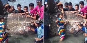 Warga Poso Heboh Ada Ikan Raksasa Seberat 1 Ton
