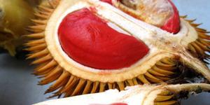 Cobain Durian Merah Khas Banyuwangi