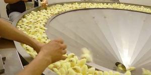 Video: Ngeri, Perlakuan Keji Pabrik Daging Ayam Akhirnya Terungkap