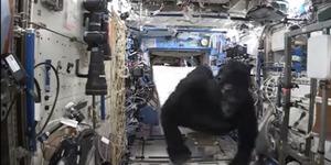 Waduh, Ada Gorilla di Stasiun Luar Angkasa