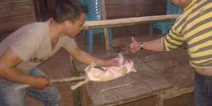 Bantai Kucing, 2 Pemuda ini Bangga Pamerkan di Facebook