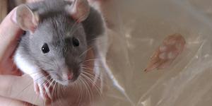 Ibu ini Panik Lihat Bayinya Muntahkan Sosis Campur Kaki Tikus