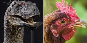 Ilmuwan Akan 'Bangkitkan' Dinosaurus dari Ayam