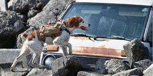 Robodog, Rompi Canggih Perkuat Anjing Cari Korban Bencana