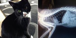 Ditembak 30 Kali, Kucing di Inggris Tetap Hidup