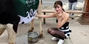Heboh! Gadis Cantik Seksi Jadi Pemerah Susu Sapi di China