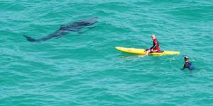 Surfing di Bali, Turis AS Diserang Hiu Sampai Masuk RS Singapura