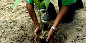 Tiap Pengantin Baru di Padang Wajib Menanam 1 Pohon
