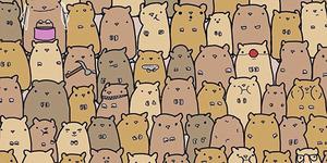 Yuk Temukan Kentang di Sekumpulan Hamster Ini